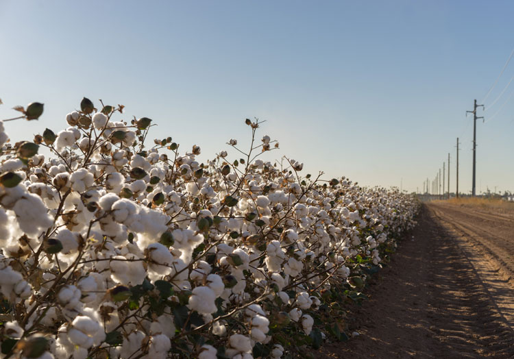 Barnhardt outlines purified cotton's credentials
